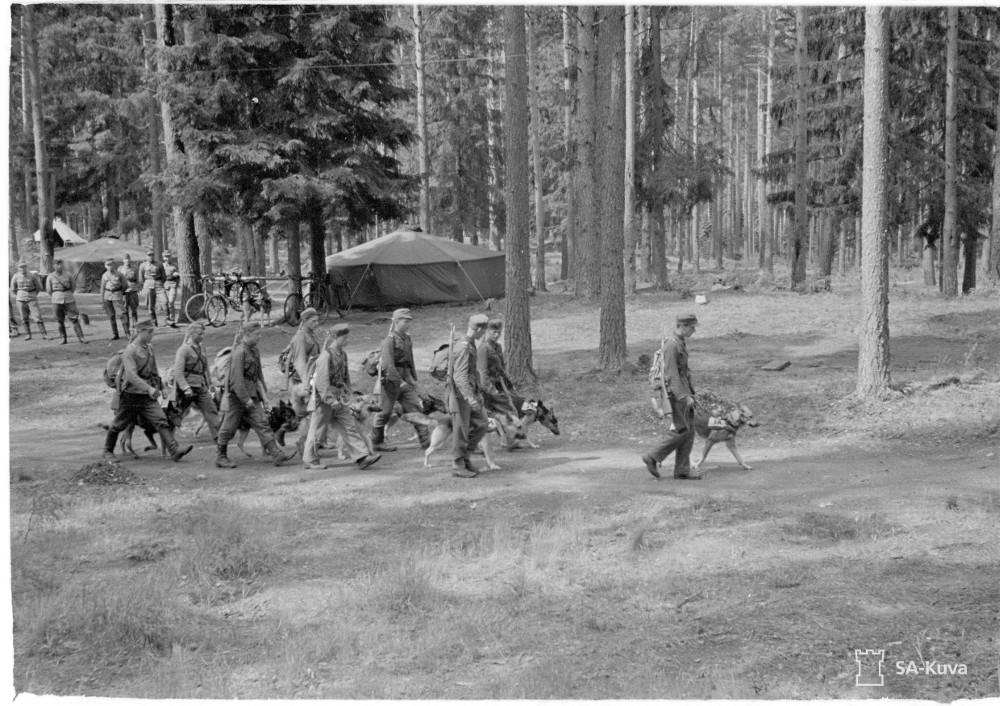 Koulutetut sotakoirat ohjaajineen lähtevät leiriltä rintamalle.